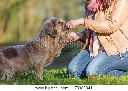 Dog Gives A Woman The Paw