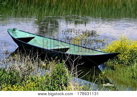 Rowboat moored between the rich coastal vegetation of the yellow flowers and reed, in the lake