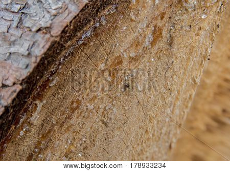 Resin On Spruce Wood