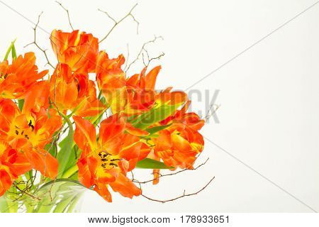 Arrangement of orange parrot tulips and fine branches and twigs in a glass vase and copy space.
