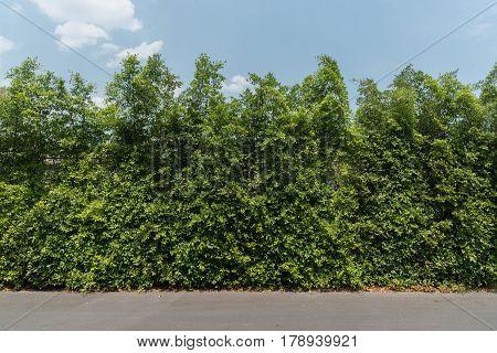 Banyan Tree Green Fenc