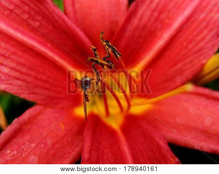 A tiny and intricately detailed insect with textured eyes on a bright red flower on a sunny summer day.