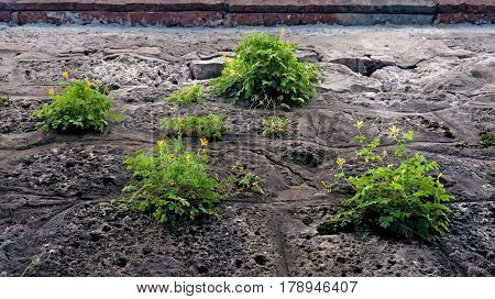 abstract background with green grass growing in gray concrete stone wall in summer