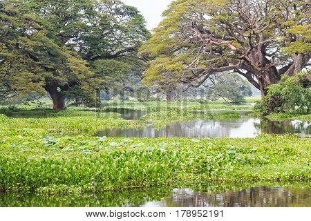 Beautiful view of green tropical marshland in Sri Lanka
