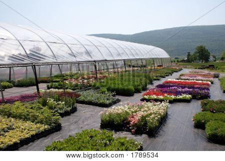 Greenhouse Country