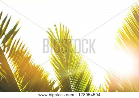 Sunlight over green palm leaves. Tropical greenery trendy background. Place for text in your design.