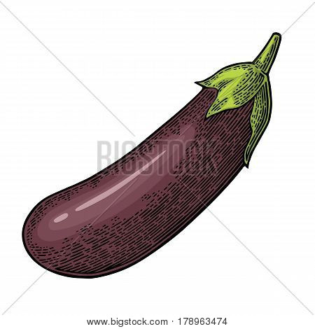 Eggplant. Vector color vintage engraved illustration for menu, poster, label. Isolated on white background