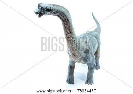 View From The Top Of Green Brachiosaurus Altithorax From The Late Jurassic Full Body White Backgroun