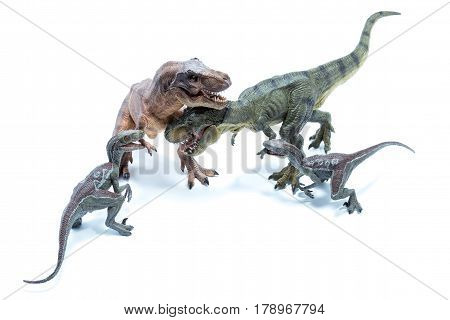Two Dinosaur Tyrannosaurus Rex And Two Velociraptors Raptor Fighting And Biting Each Other - White B