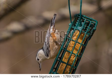 A hungry bird seems to cling precariously to a feeder swinging in the breeze