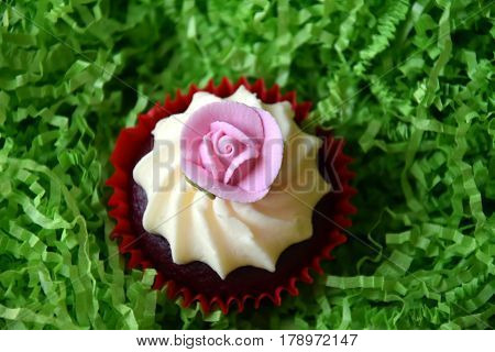 Muffins decorated with rose flower on green background. Spring Mother's day Valentine's day concept. Homemade cupcake with whipped cream and pink rose spring flower on green grass background.