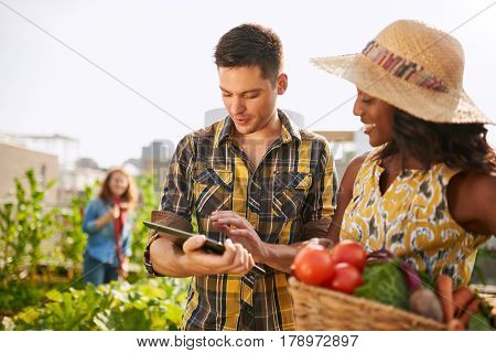 Group of gardeners tending to organic crops at community garden and picking up a basket full of fresh produce from their small business