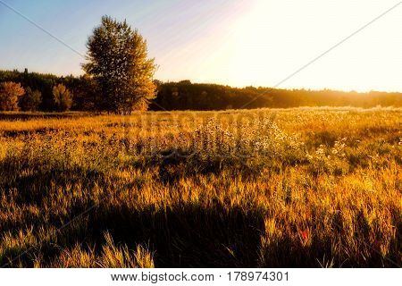 The Golden Hour on an Isolated Field