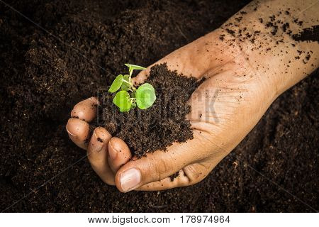 Small tree with Hands and soil , soil background