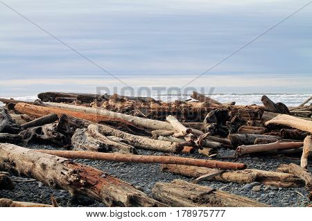 Driftwood Logs Covering a Beach in Washington State