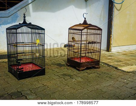 Birds in cage while sunbathing in front of house photo taken in Jakarta Indonesia java