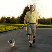Sunset highlights the edges of a small dog as active retired man returns from a walk poster