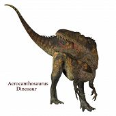 Acrocanthosaurus Dinosaur Tail with Font 3d illustration - Acrocanthosaurus was a carnivorous theropod dinosaur that lived in North America in the Cretaceous Period. poster