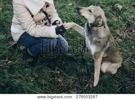 Cute Gray Dog With Funny Emotions In Park Giving Paw To Owner. Dog Shelter. Adoption Concept. Woman