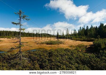 Černohorské Rašeliniště Peat National Park In The Krkonoše Mountain Range, Czech Republic