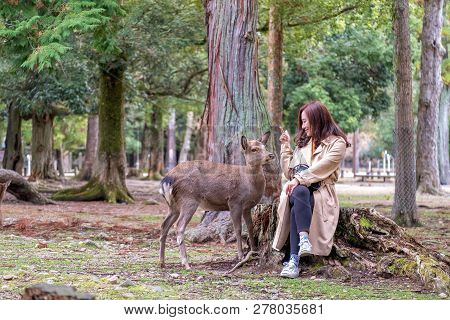 Closeup Image Of An Asian Woman Sitting And Playing With A Wild Deer In The Park