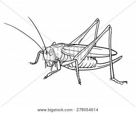 Grasshopper, Graphic. Hand Drawn Style Vector Design Illustrations