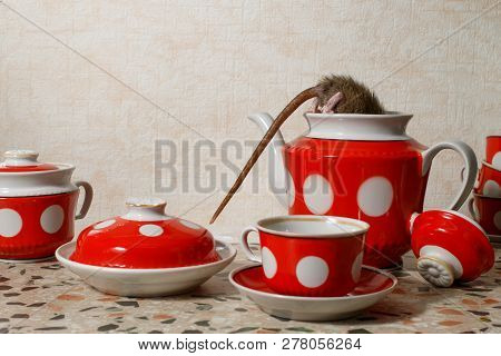 Close-up One Rat (rattus Norvegicus) Climbs Into Red Teapot Near Red Cups On Countertop At Kitchen I