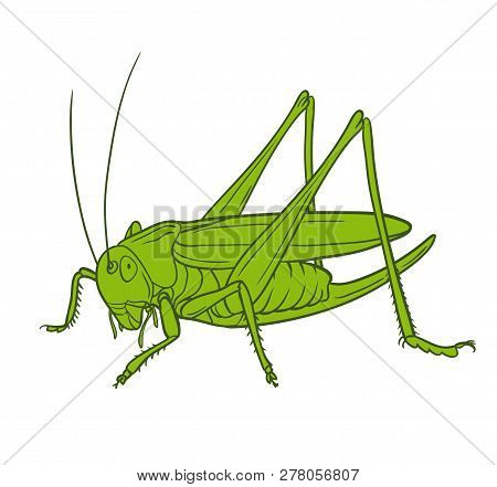 Grasshopper  Of White Background, Graphic. Hand Drawn Style Vector Design Illustrations