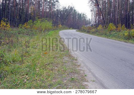 A Gray Asphalt Road With A Turn In A Pine Forest Among Grass And Trees
