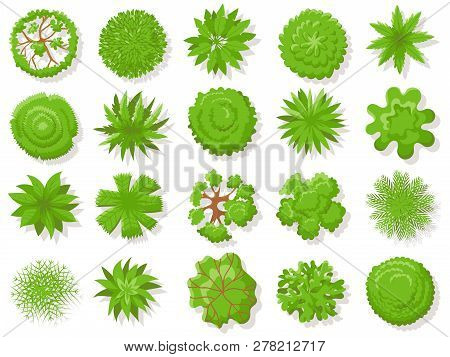 Top View Plants. Tropical Trees, Green Plant Tree From Above For Aerial Map Isolated Vector Collecti