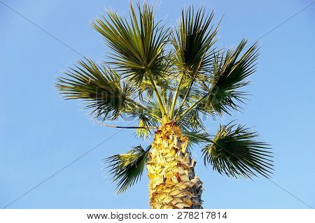 Palm Trees With Branches And Leaves In The Park Garden