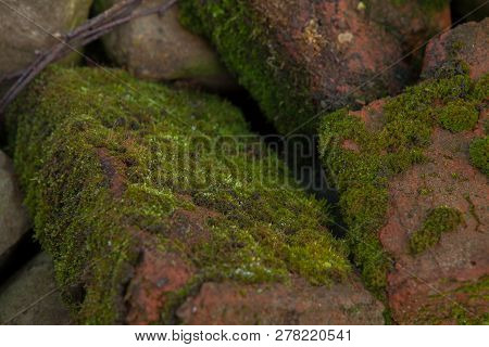Green Moss Background Beautiful In Nature.closeup Of Moss On Brick Wall