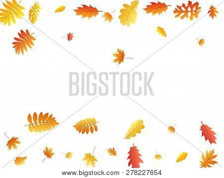 Oak, Maple, Wild Ash Rowan Leaves Vector, Autumn Foliage On White Background. Red Gold Yellow Ash An