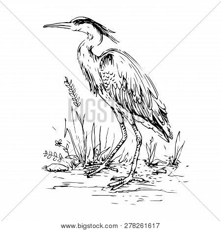 Heron In Vintage Engraving Style. Hand Drawn Vector Retro Illustration