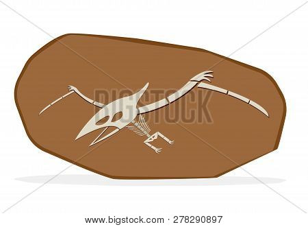 Pterosaurs Bone In Cray Fossil, On White Vector Art Art