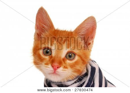 kitten in striped vest