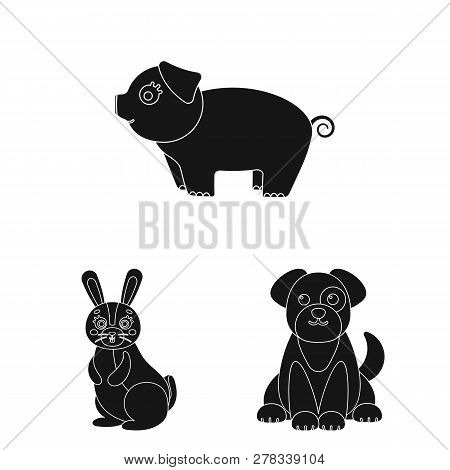 Vector Illustration Of Animal And Habitat Sign. Set Of Animal And Farm Stock Symbol For Web.