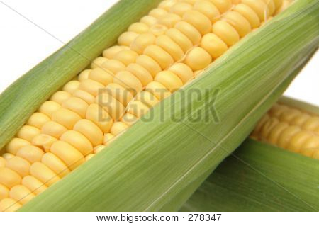 Corn In Cob 3