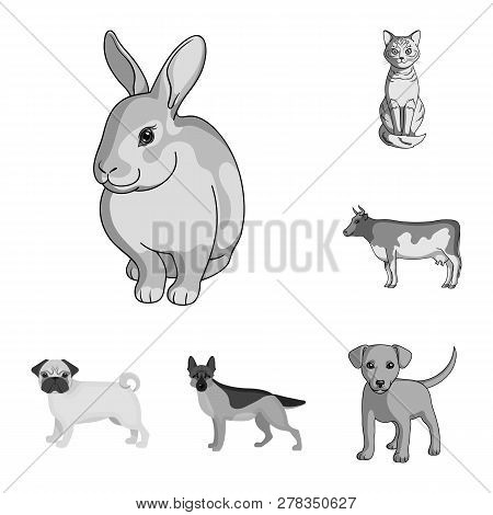 Vector Illustration Of Animal And Habitat Sign. Set Of Animal And Farm Stock Vector Illustration.