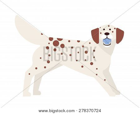 Frisky Spotted Dog Playing With Ball. Playful Adorable Purebred Doggy Or Puppy Isolated On White Bac