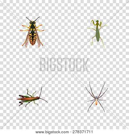 Set Of Insect Realistic Symbols With Arachnid, Grasshopper, Sting And Other Icons For Your Web Mobil