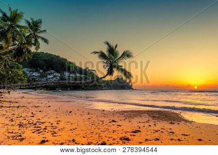 Coconut Palms At Sunset Over Tropical Beach In Anse Takamaka Beach, Mahe, Seychelles.