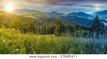 Time Change Above Panorama Of A Beautiful Meadow In Mountains. Spruce Trees On A Hillside. Rolling H