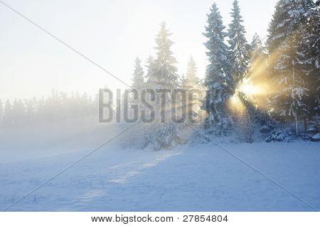 Sunbeams trough the tree