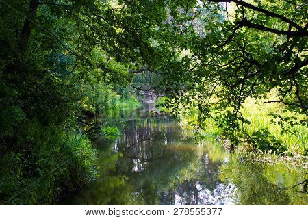 Small River. On The River Bank There Are Many Trees On Both Sides. Trees Hang Over The Water. Grass