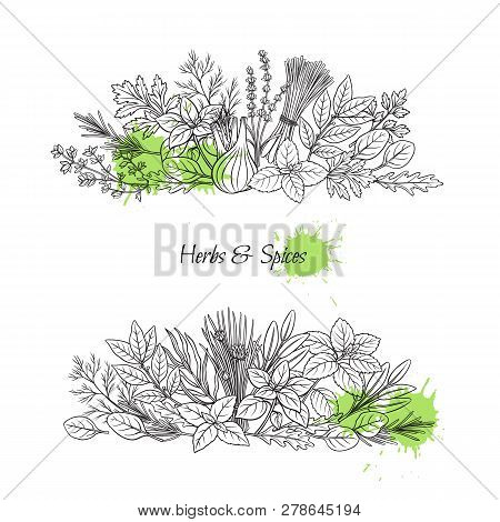 Culinary Herbs And Spice Banners. Bay Leaf, Lemongrass, Fennel, Dill, Cilantro And Chives. Thyme, Le