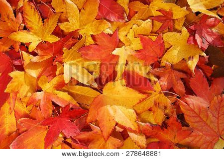 Bright, Warm Autumn Foliage Of Yellow Color On The Earth In Sunny Weather. Warm Autumn Day Backgroun