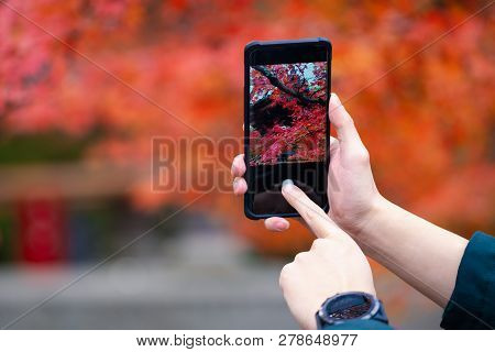 Women Hand Using Smart Phone With Take Photo, Young Girl Using Photography Of Smartphone Of Maple Le