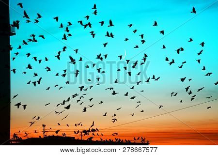 Groups Of Birds Flying Above Roof At Sunset On Moon Background. Birds Silhouettes Above Building Sil