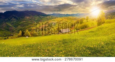 Dandelions On Rural Field In Mountains At Sunset In Evening Light. Beautiful Springtime Landscape. V